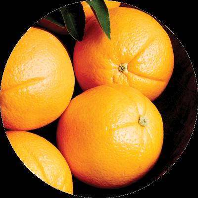 Citrus - Valencia Oranges