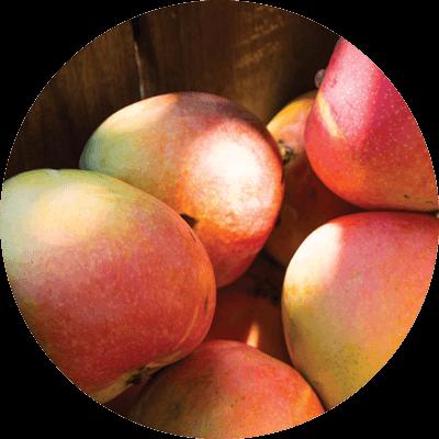 Mangoes - R2E2