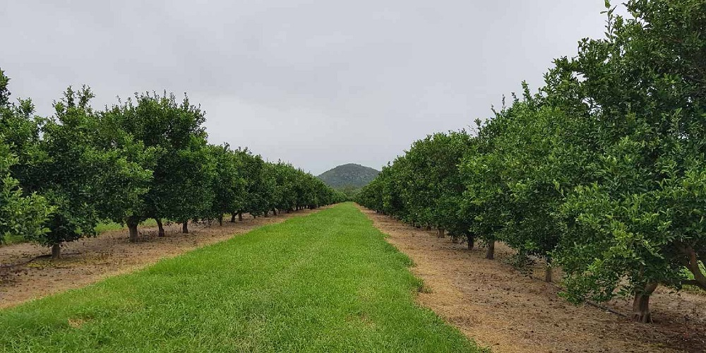 Red Rich Fruits Citrus Orchards