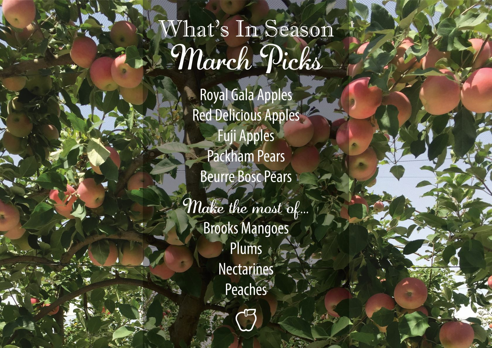 What's in season - March Picks