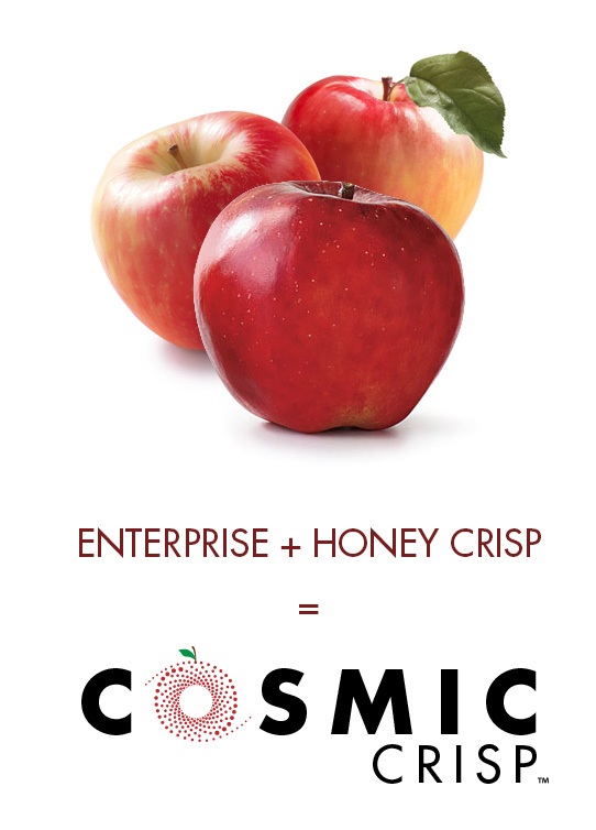 Cosmic Crisp is a cross between Enterprise & Honey Crisp cultivars